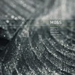 Molly Berg, Olivia Block, Steve Roden & Stephen Vitiello, Moss, 12k, acoustic-electronic, impro, field recordings, Aurelio Cianciotta, Molly Berg, Olivia Block, Steve Roden & Stephen Vitiello - Moss.jpg